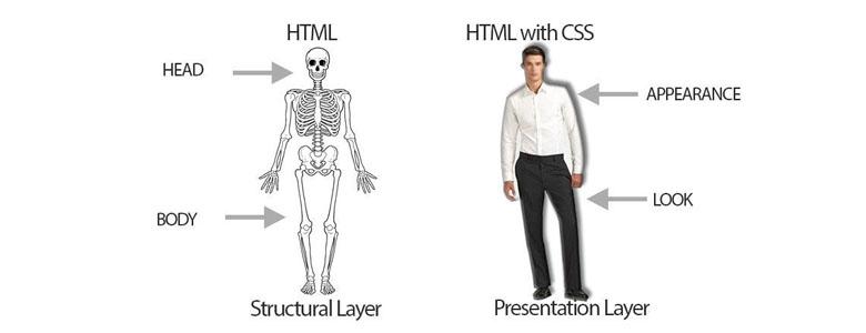 بررسی HTML و CSS در برنامه نویسی وب